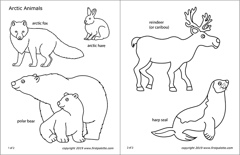 Arctic Polar Animals Free Printable Templates & Coloring