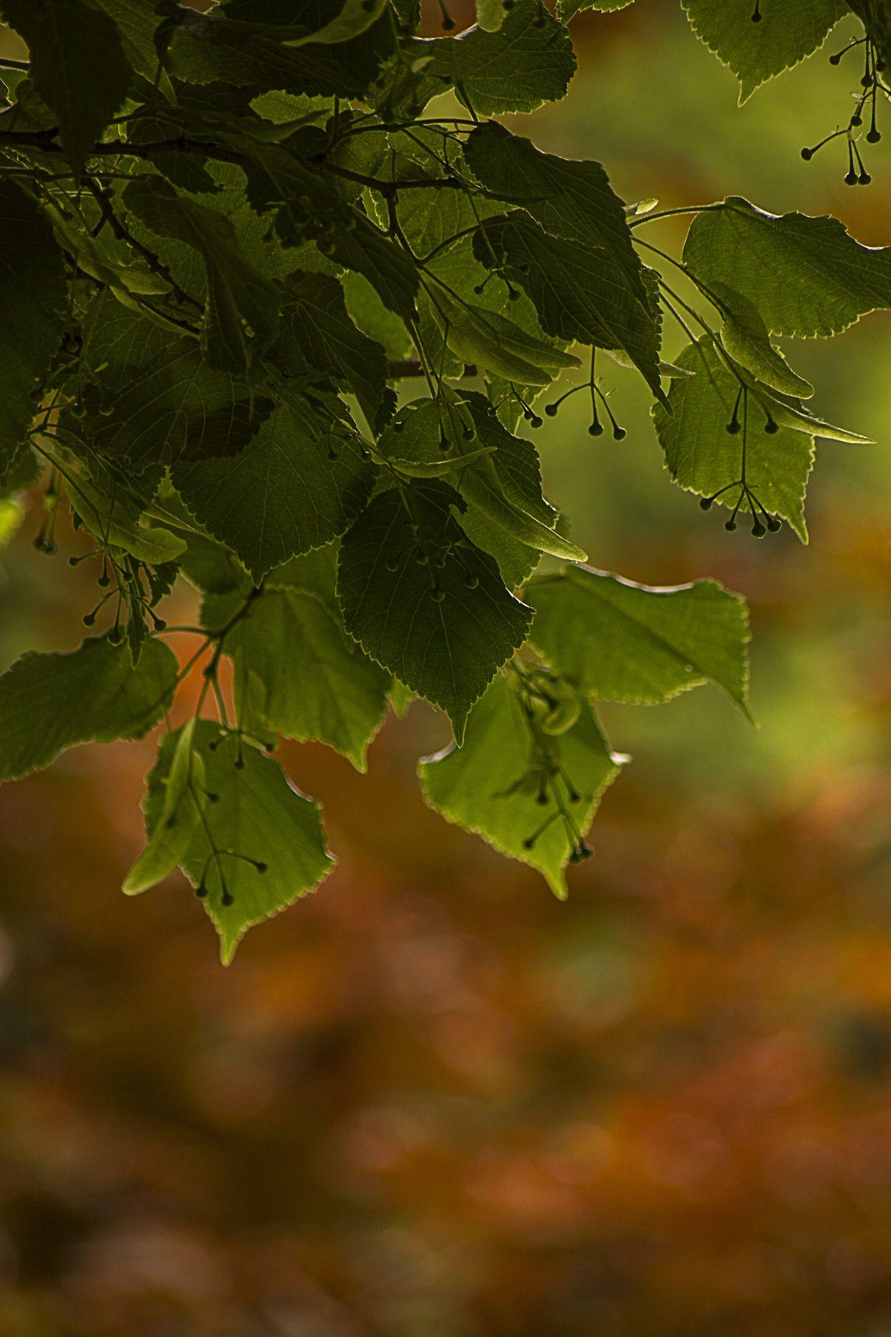 ** brown & green