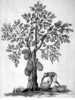 Contoh Soal Psikotes Dan Cara Mengerjakannya Http Jajalabut Com Contoh Soal Psikotes Dan Cara Mengerjakannya Html Jackfruit Tree Fruit In Season Jackfruit