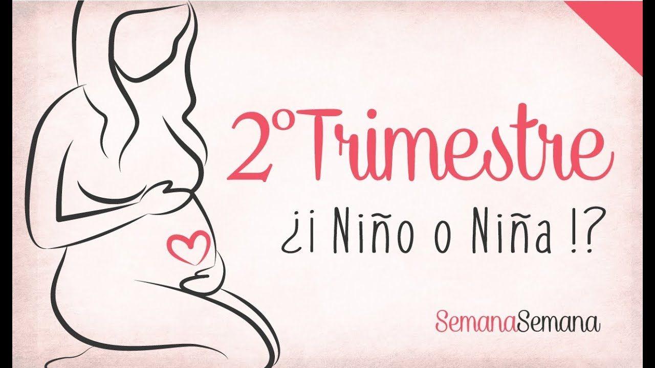 Trimestre 2 De Embarazo 9 Meses De Embarazo El Segundo Trimestre