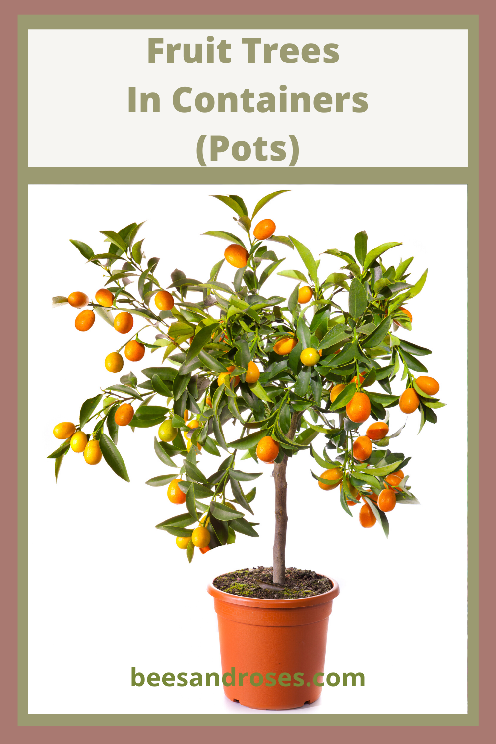 Tips And Tricks For Growing Fruit Trees In Containers Bees And Roses Fruit Trees Fruit Garden Fruit Trees In Containers