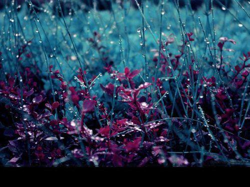Nature Rain Wallpapers Nature Wallpaper Amazing Nature Photography