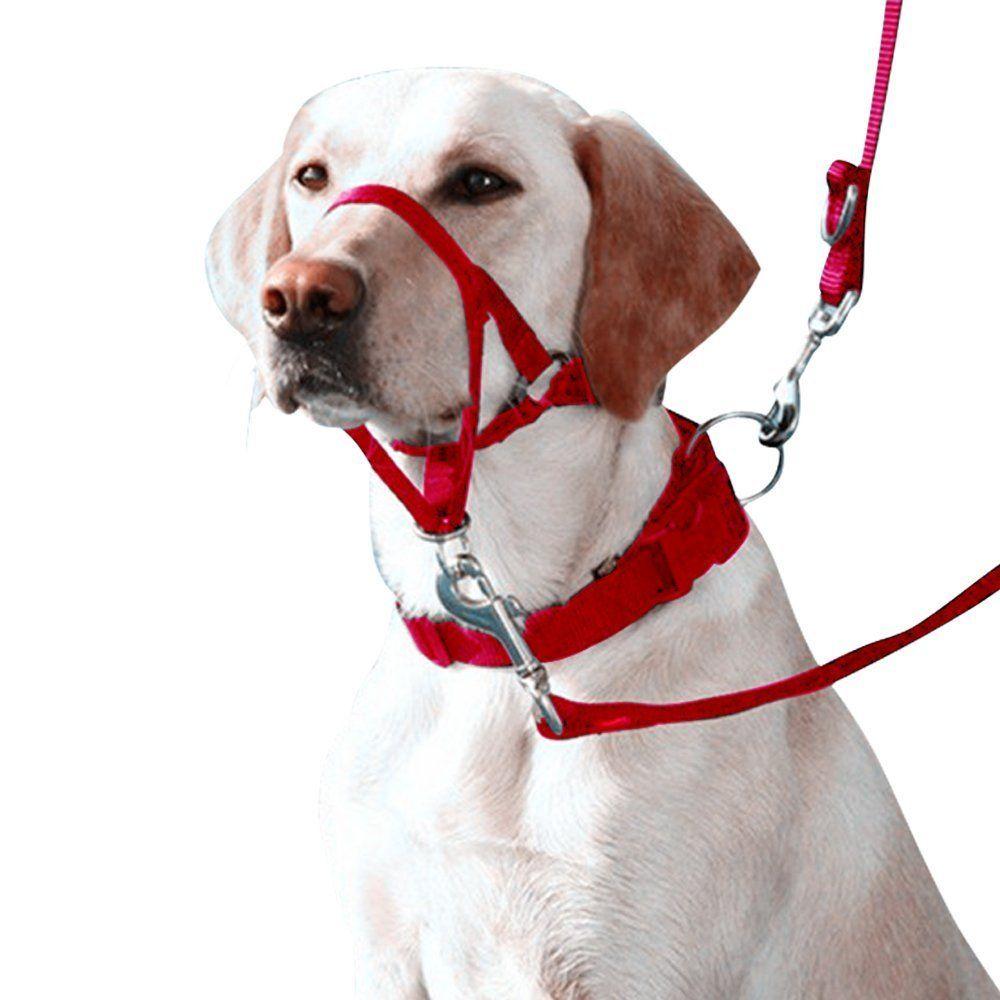 Eastop Dog Head Halter Combination 4 Parts Dog Head Collar Dog