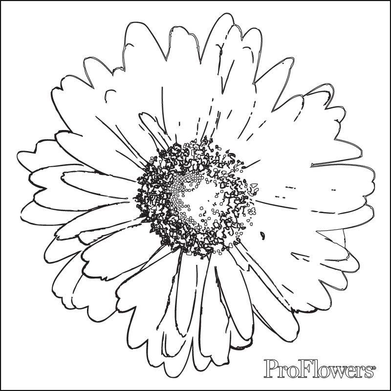 Pin de sweta roy en Patter | Pinterest