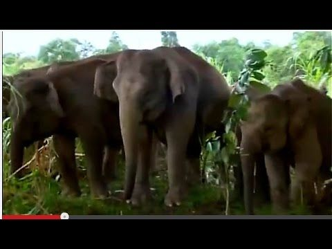 Animal Planet Channel 2015 | Wild Life Documentary | Wildlife Documentary National Geographic #10 -