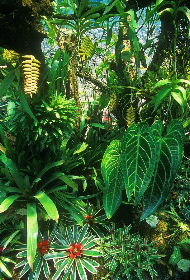 La mortella isola d 39 ischia italy think green for Vivero plantas tropicales