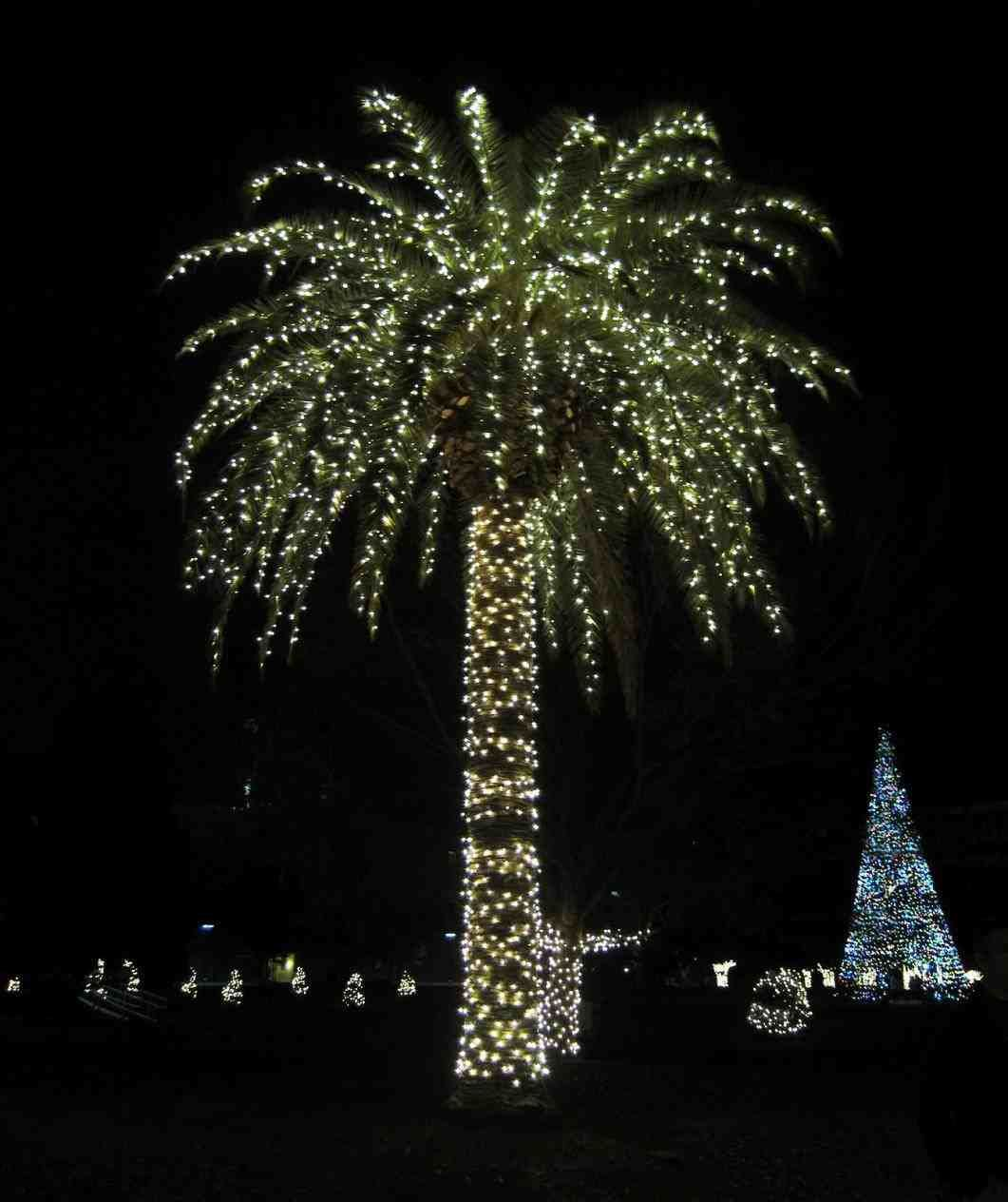 New Post Palm Tree Christmas Lights Corona
