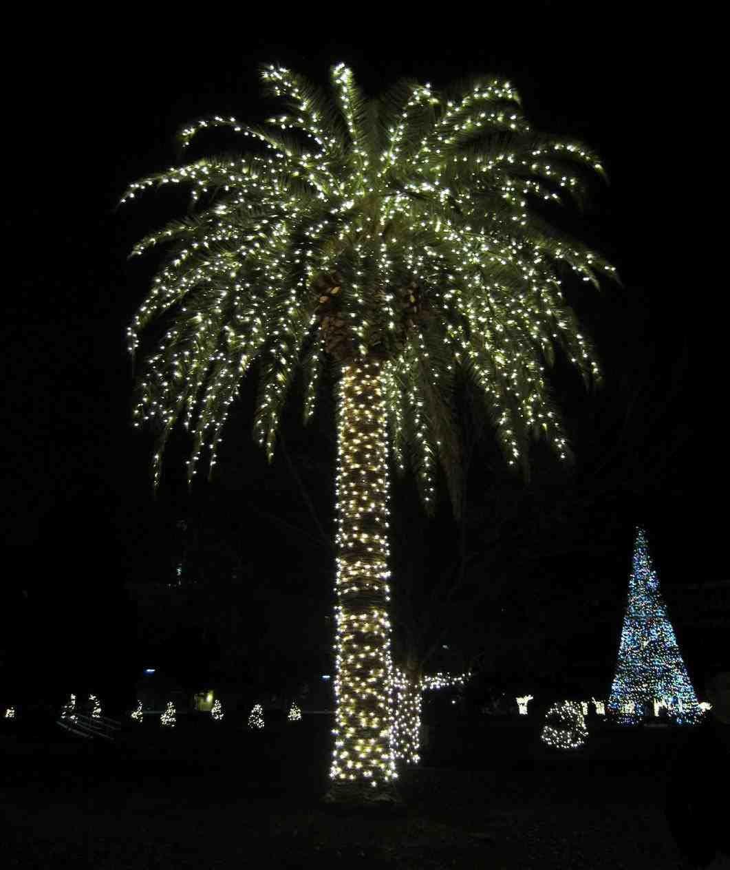 New Post Palm Tree Christmas Lights Corona