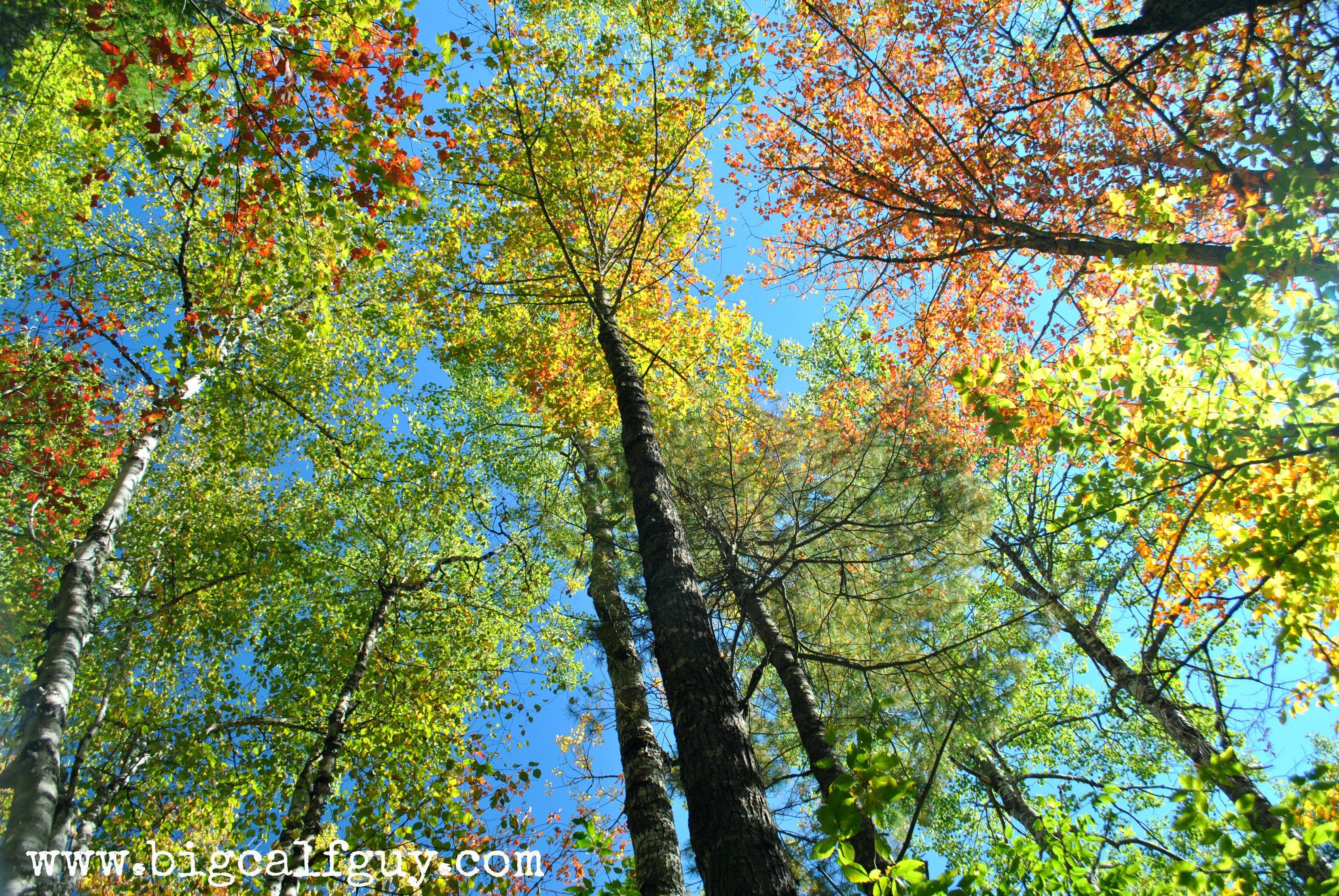 gulfhagas #foliage #fall #autumn #leaves #colors #hiking #trees ...