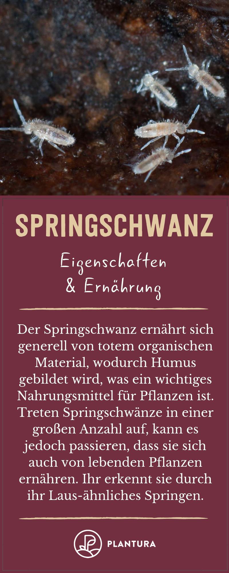 Springschwanz Erkennen Erfolgreich Bekampfen Plantura Schadlinge Im Garten Pflanzen Lebende Pflanzen