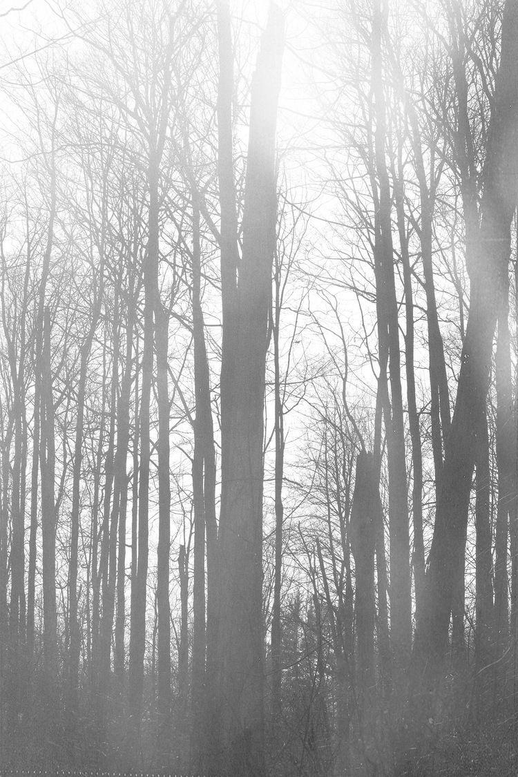 Phone wallpaper kinda dreamy forest in black & white