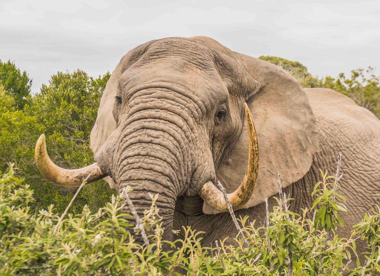 Kariega Big Five Game Reserve Volunteer Programme, South