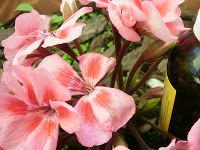 La Botica Escondida: LOCIÓN NATURAL REAFIRMANTE DEL BUSTO