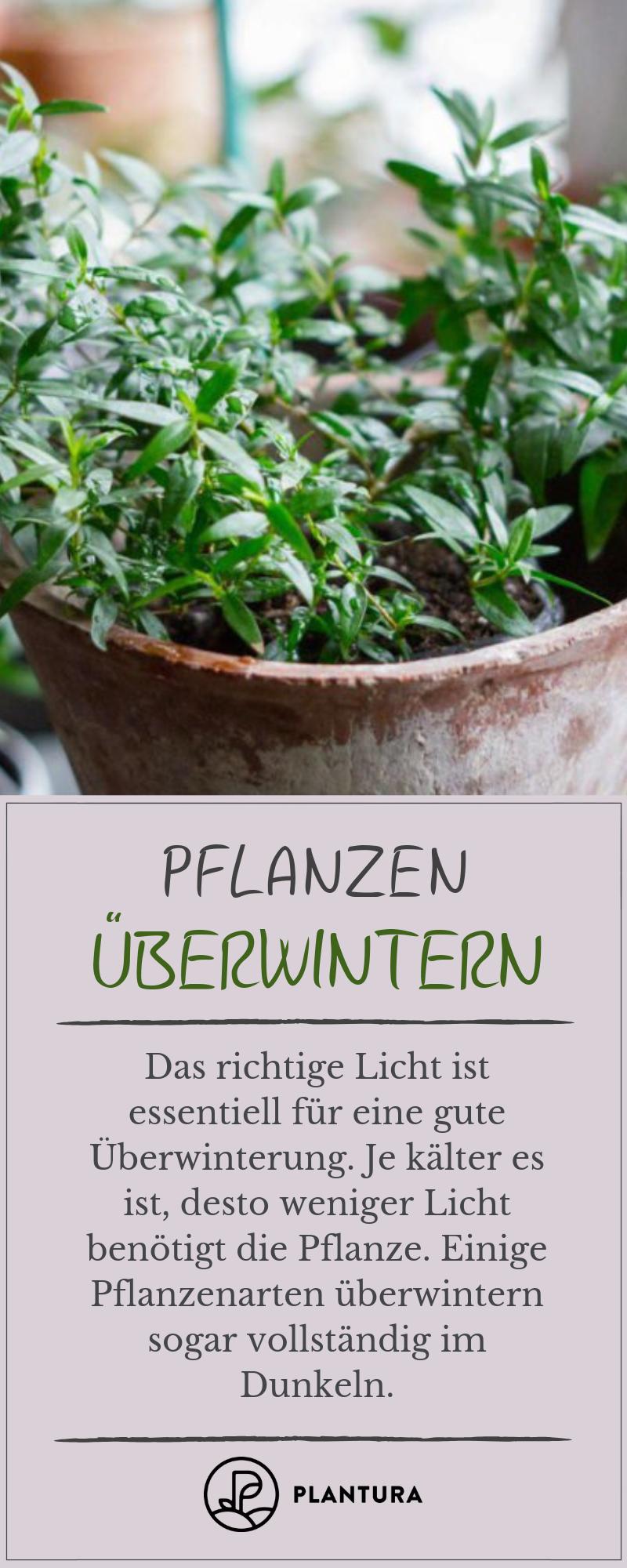 Pflanzen richtigüberwintern 10 Experten Tipps für Ihren Garten DIY Garten Anleitungen  ~ 26155015_Sukkulenten Überwintern Temperatur