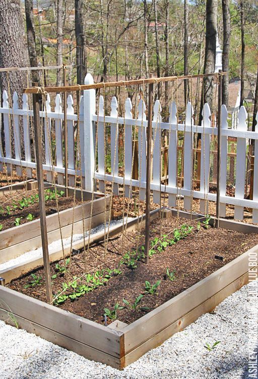 A Trellis for Growing Peas is part of Diy garden trellis, Garden trellis, Vegetable garden design, Diy garden, Growing peas, Greenhouse gardening - How to make an easy trellis for growing peas, bean and tomatoes  Easy DIY trellis to build for vertical gardening  Growing vegetables on a trellis