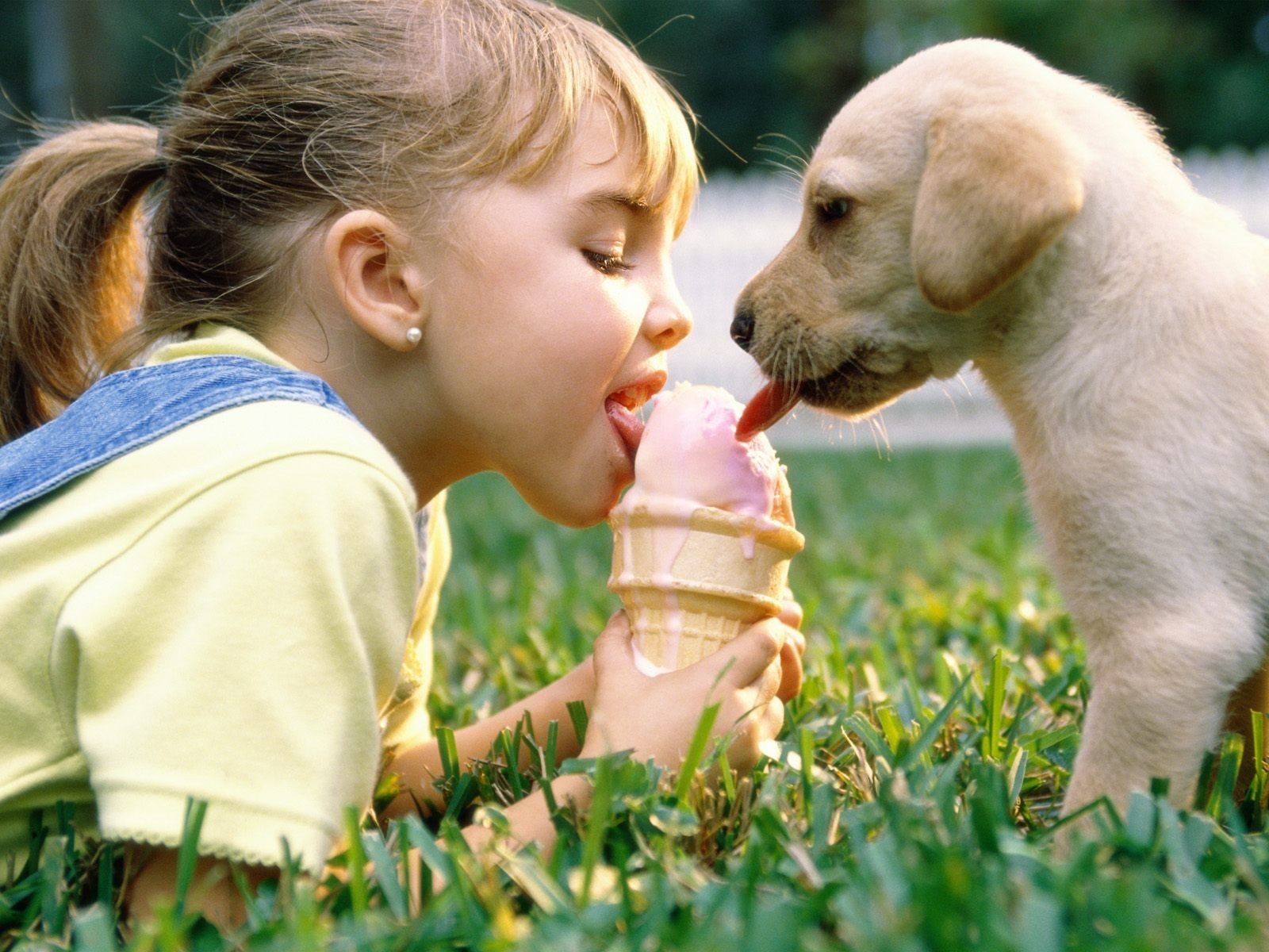 animal lover | Cute Puppies | Dowcipy | Dogs, kids, Dogs ...