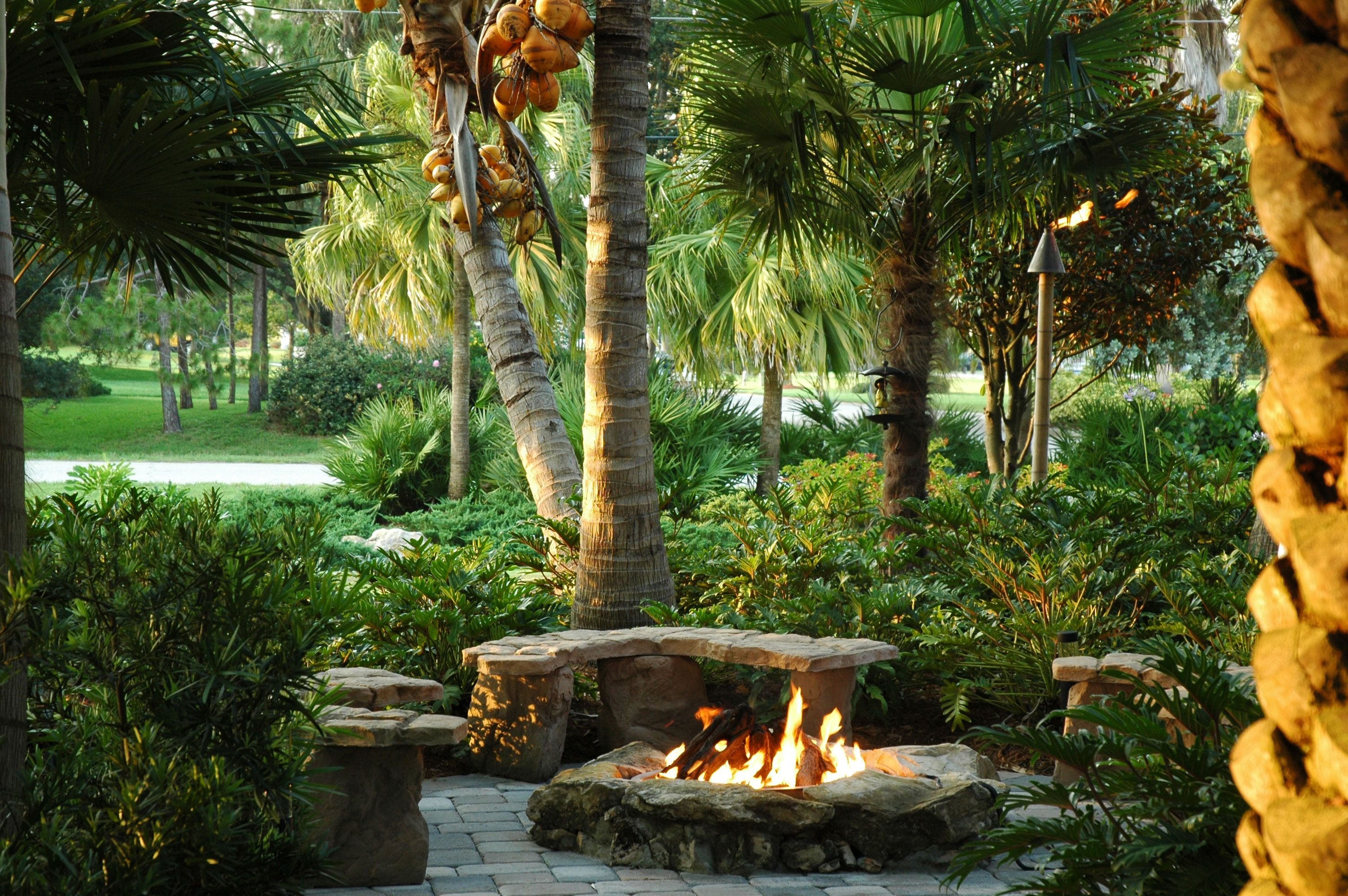 1000 images about florida landscaping on pinterest foxtail palm landscapes and palms