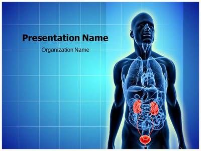 Urinary system powerpoint presentation template is one of the best urinary system powerpoint presentation template is one of the best medical powerpoint templates by editabletemplates editabletemplates graphic renal toneelgroepblik Image collections