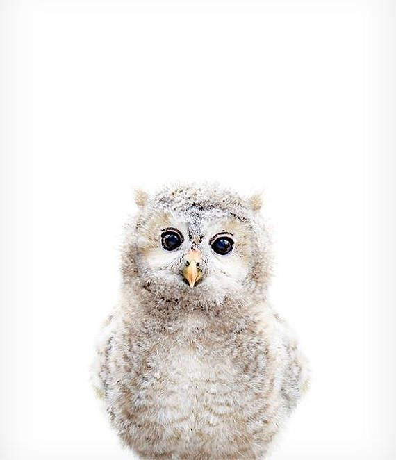 Nursery animal print, PRINTABLE art, Owl print, Woodland nursery decor, Baby animals, Nursery wall art, Baby room decor, Forest animal print