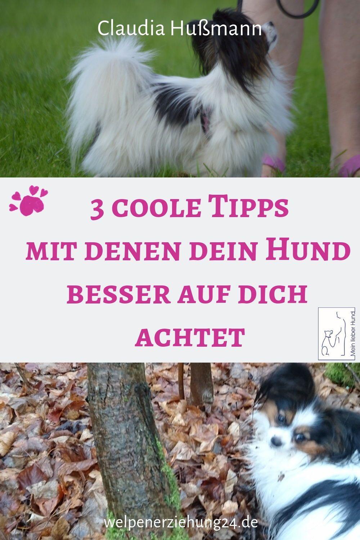 3 Klasse Tipps Damit Dein Hund Draussen Auf Dich Achtet Hunde Welpen Erziehen Hundchen Training