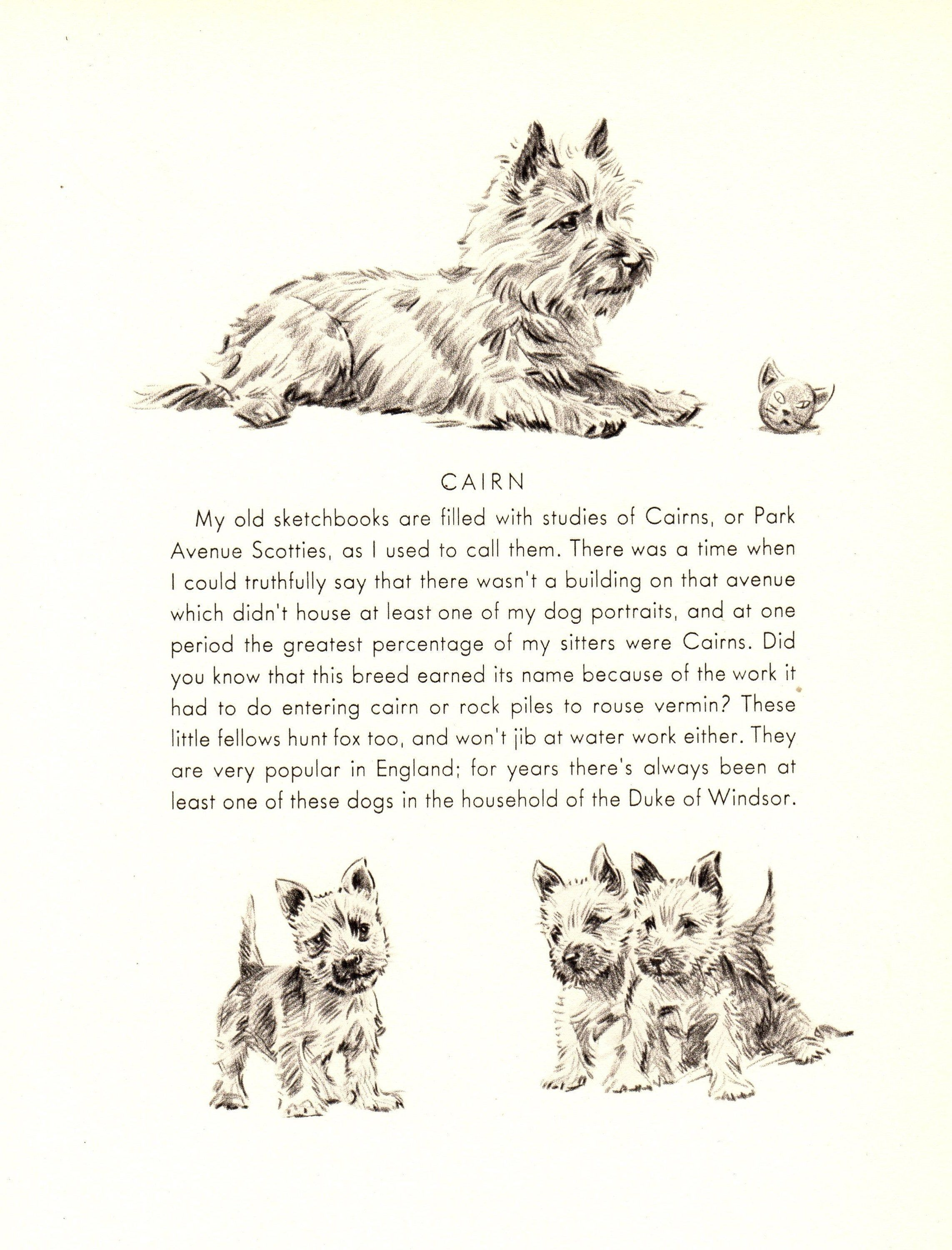 1940s Antique Cairn Terrier Art Print Neat For Kids Room