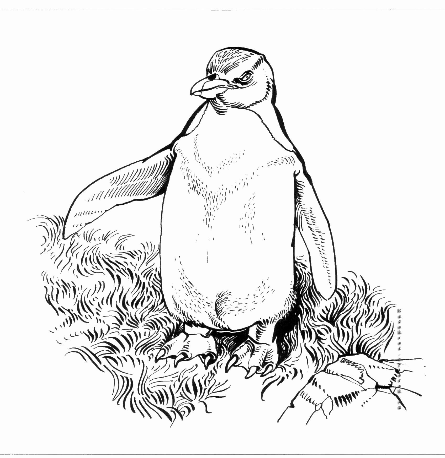 Adult Coloring Pages Penguin in 2020 Adult coloring