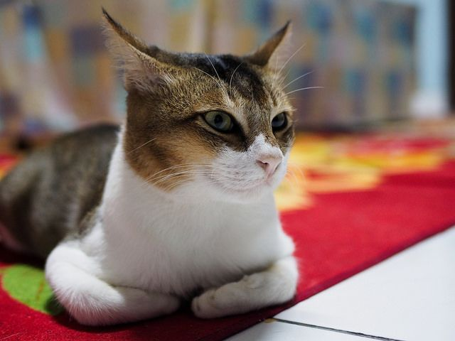 5 Signs Your Cat Is Lonely Cat Biting Cats Cat Adoption