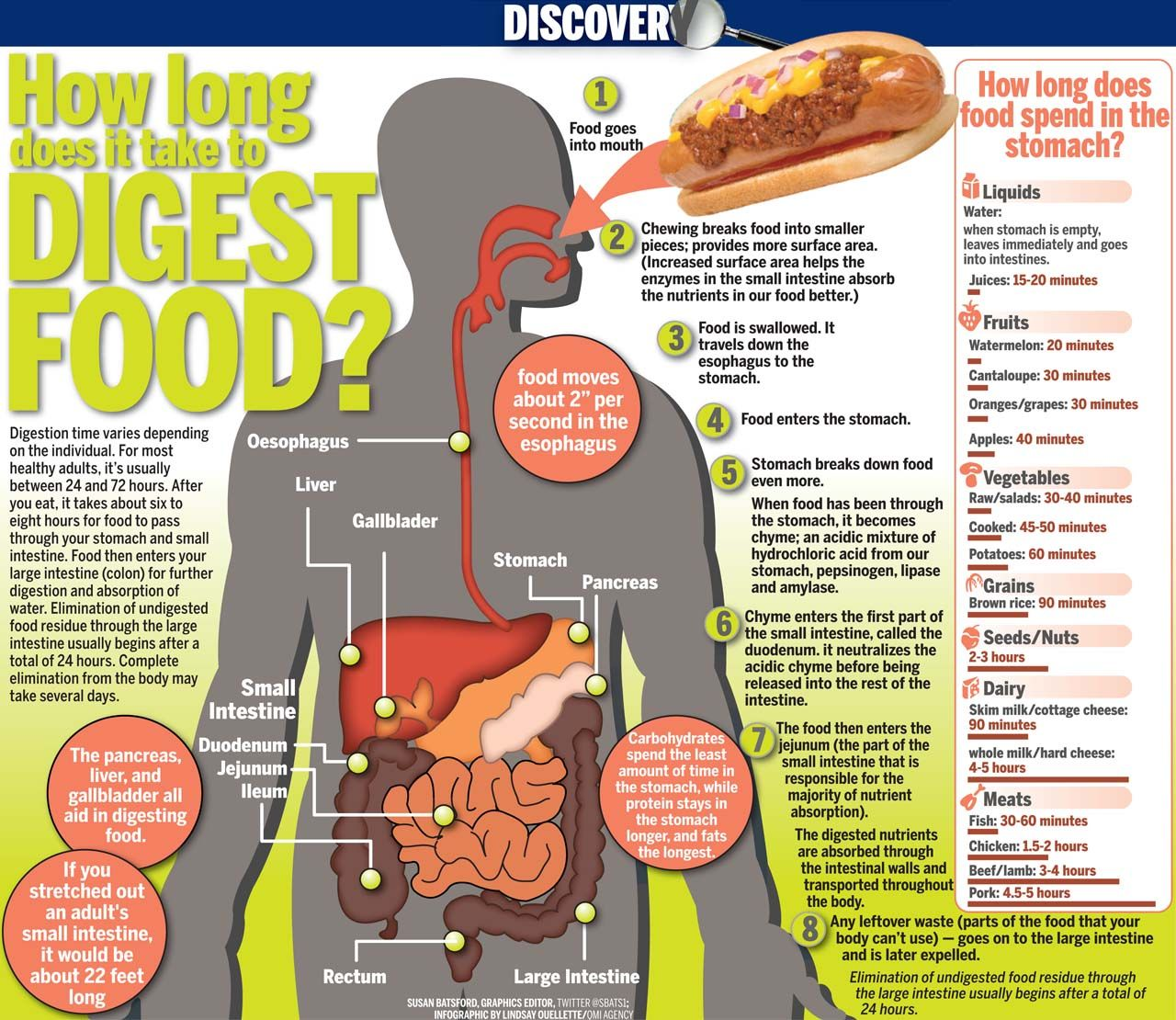 milk and meat digestion how does it take to digest food meats can take up 818
