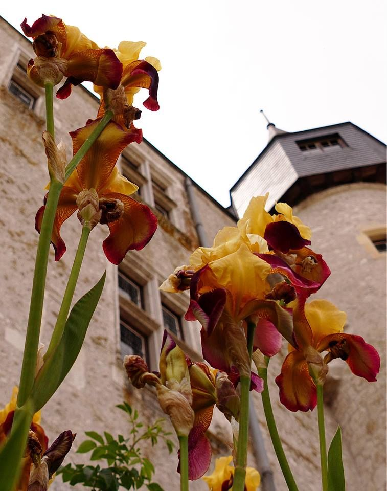Château de Beaugency - vivien desveaux photos
