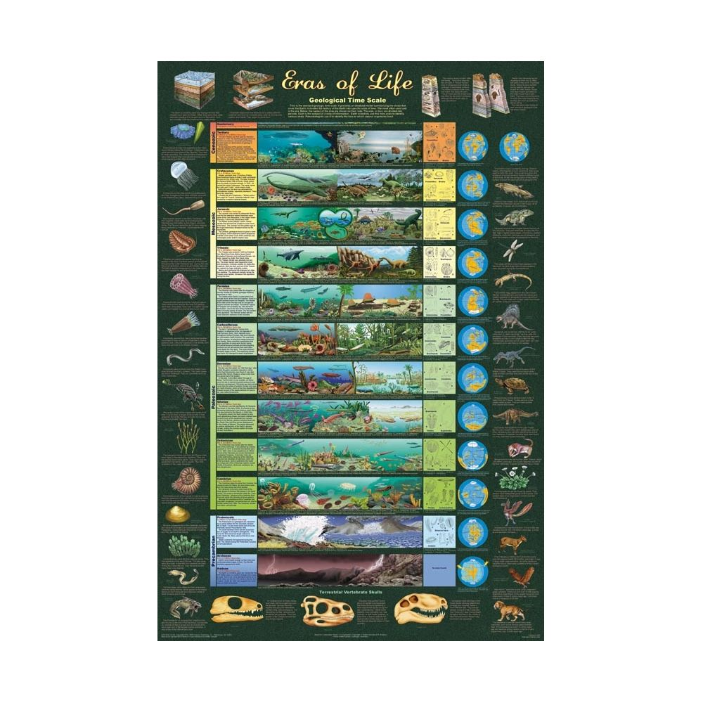 Eras of Life Poster Geological Time Scale Poster
