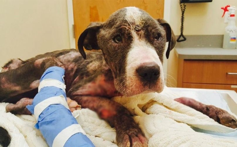 Puppy Is Lucky To Be Alive After Being Abused Left By A Dumpster Puppies I Love Dogs Save Her