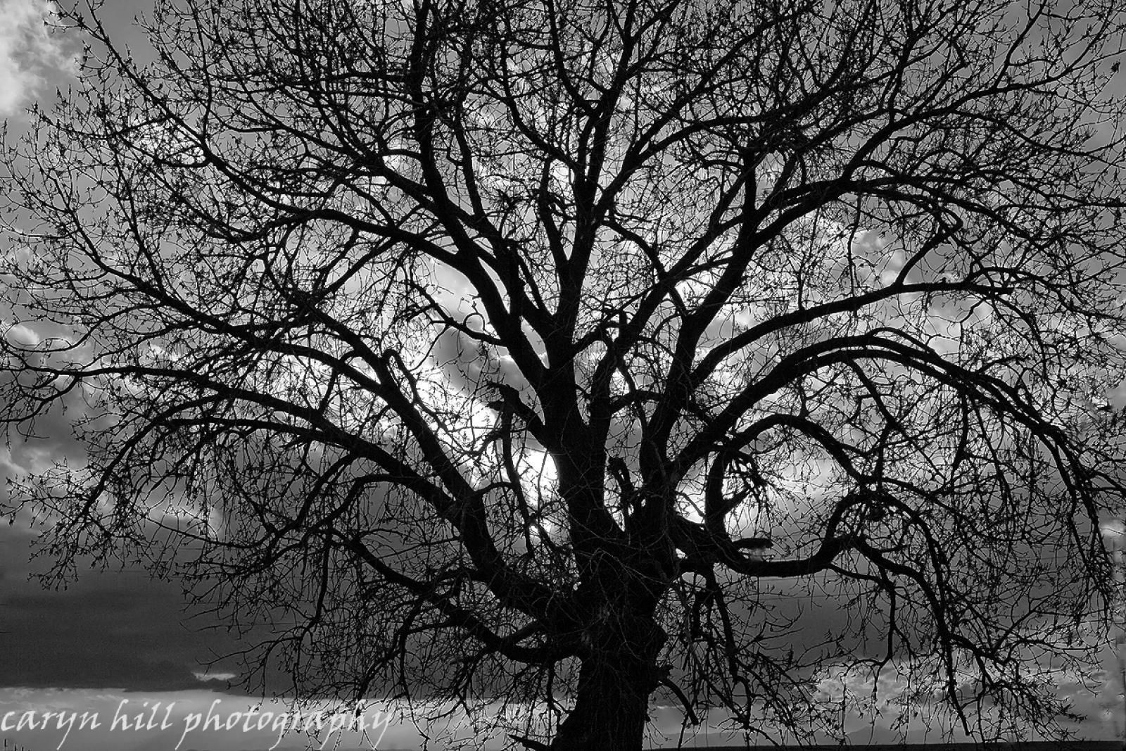 Black and white photos trees general impression this is what black and white does well nice
