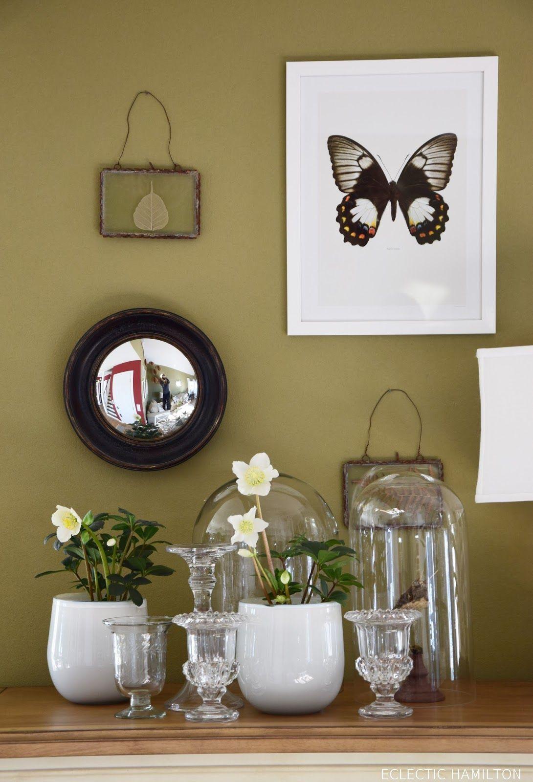 Christrosen Im Haus   Tipps Für Die Winterlichen Schönheiten