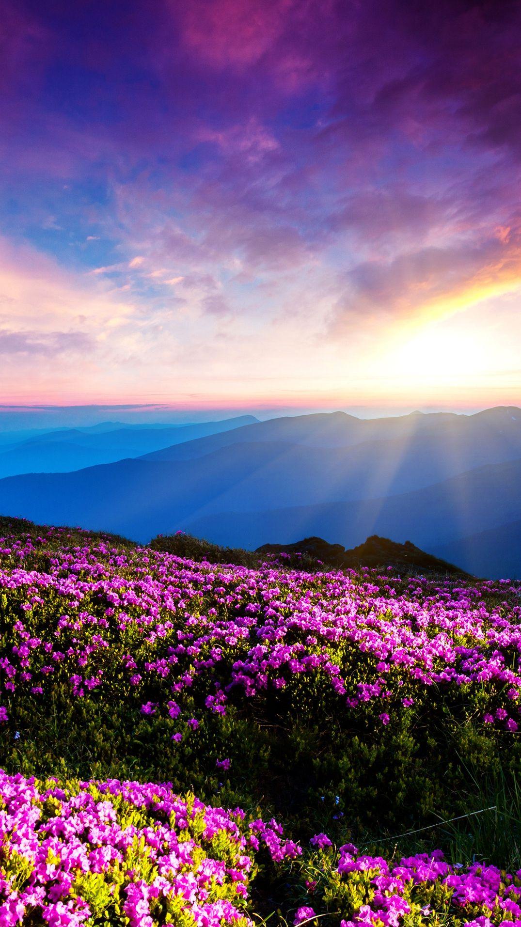 Amazing Wallpaper Mountain Flower - 6ecb091a25699e9f8243a5699eb8f5f7  Collection_988176.jpg