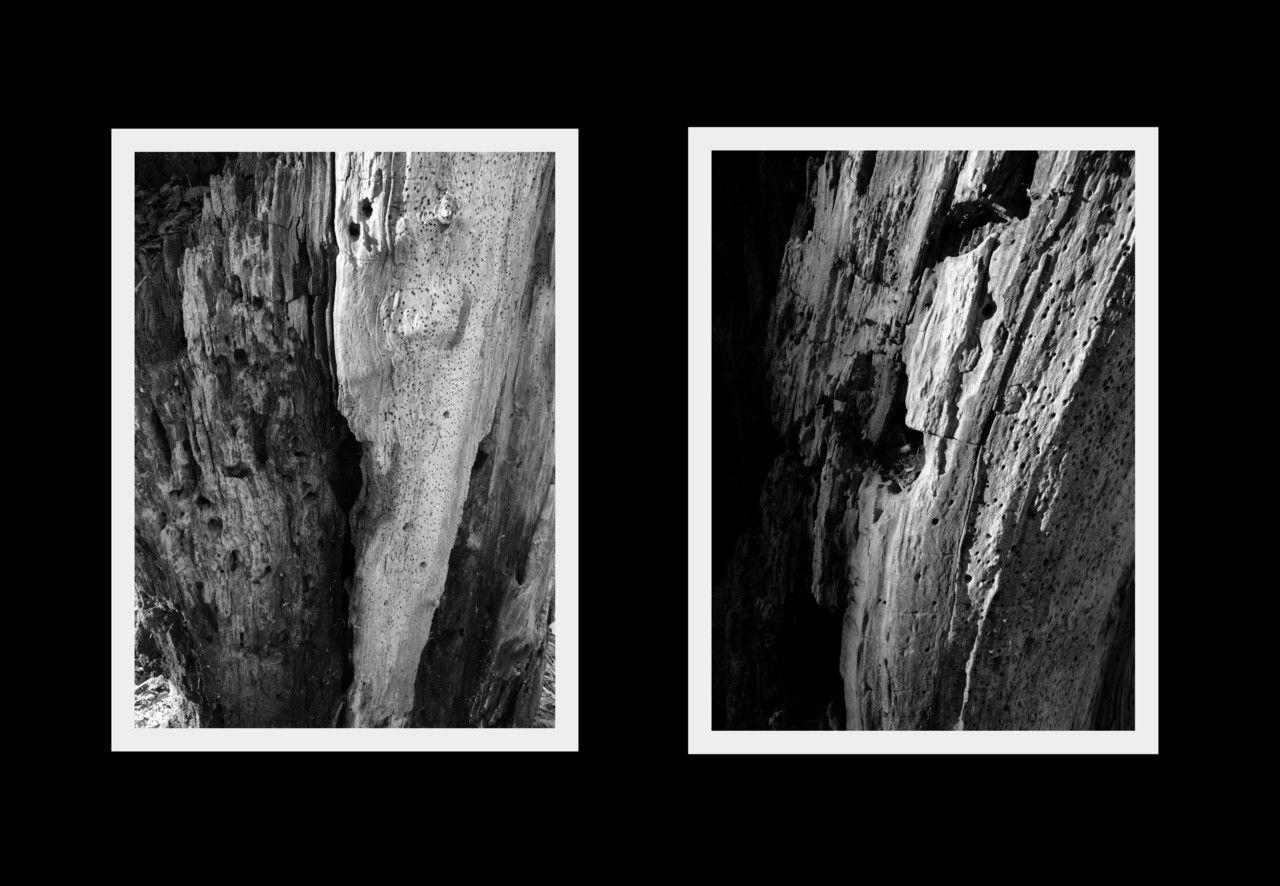 Tree root  © Charlotte Floor