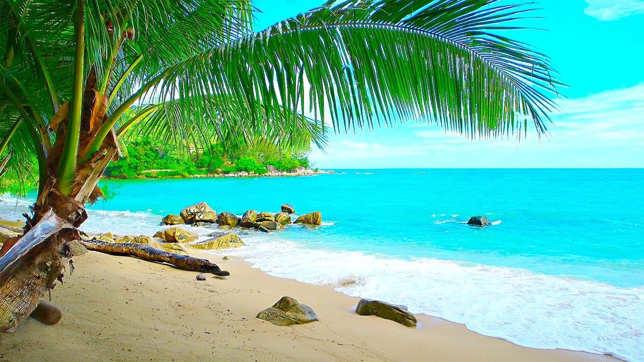 Tropical Island Beach Ambience Sound Ocean Sounds And Singing Birds Am Ocean Sounds Relaxing Music Jungle Sounds