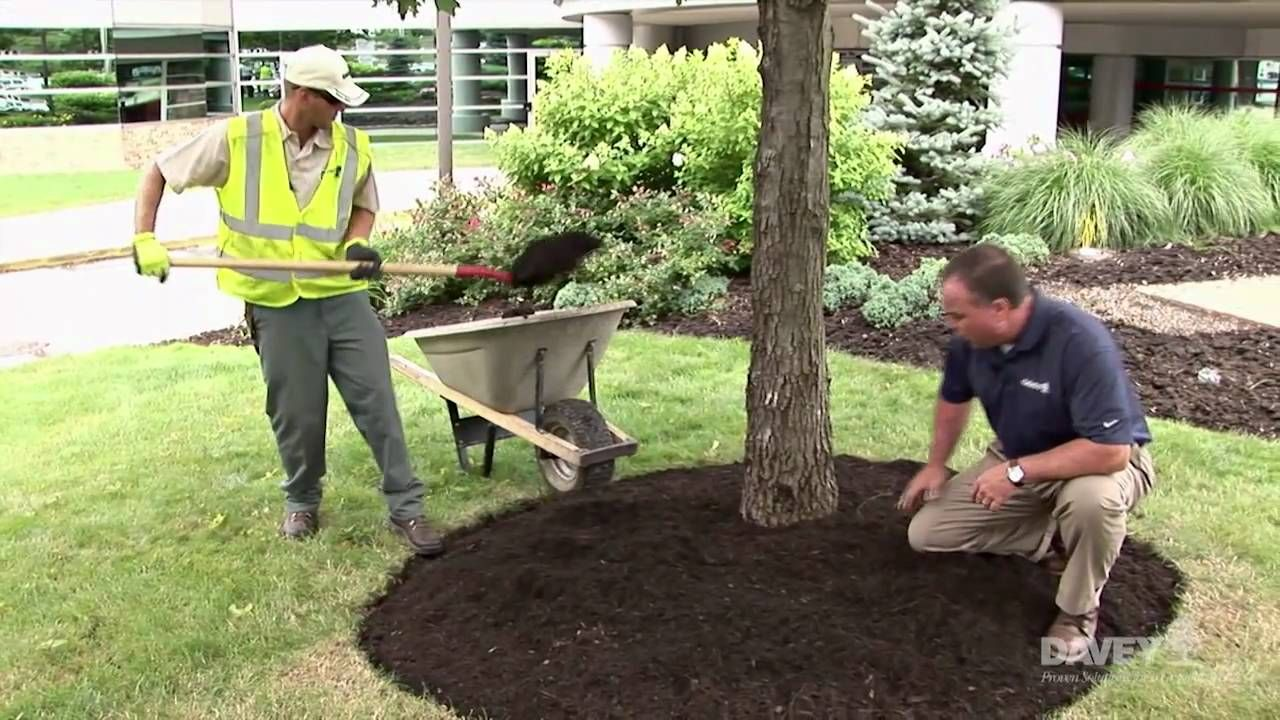 Effective Mulching Around A Tree Landscaping Around House Landscaping Around Trees Mulch Around Trees