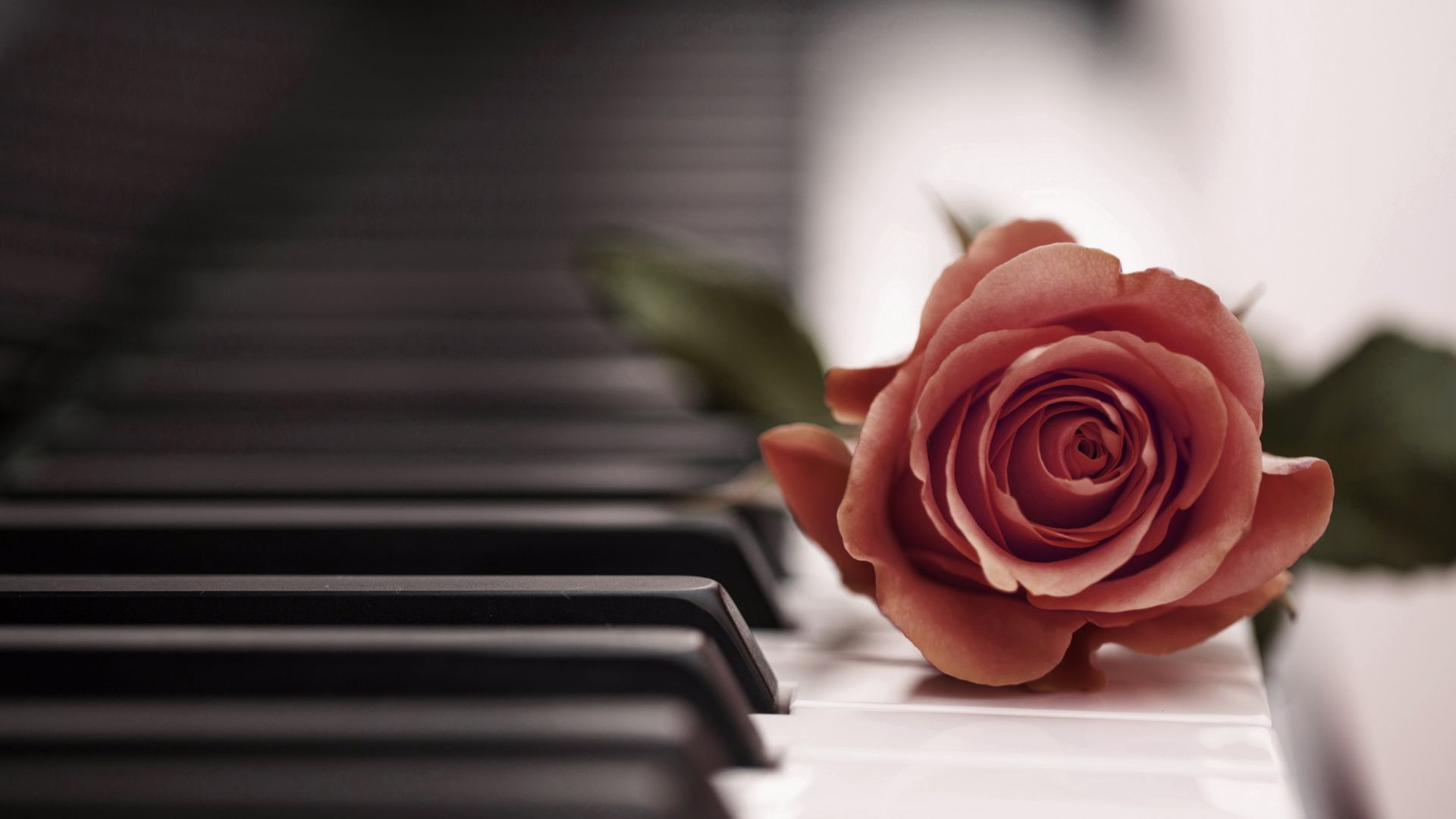 Rose Piano Wallpapers Phone With HD Desktop 1920x1080 Px 50135 KB