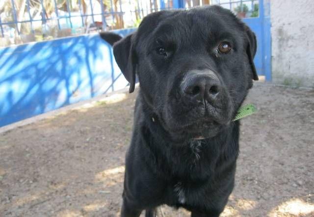 Pin auf Listenhunde suchen ein Zuhause (German BSL shelter