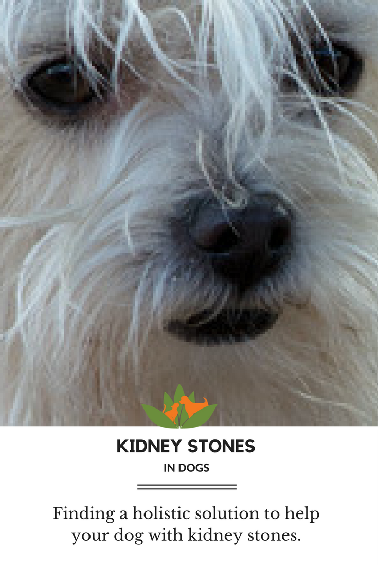 Struvite stones are the most common urinary stones in dogs