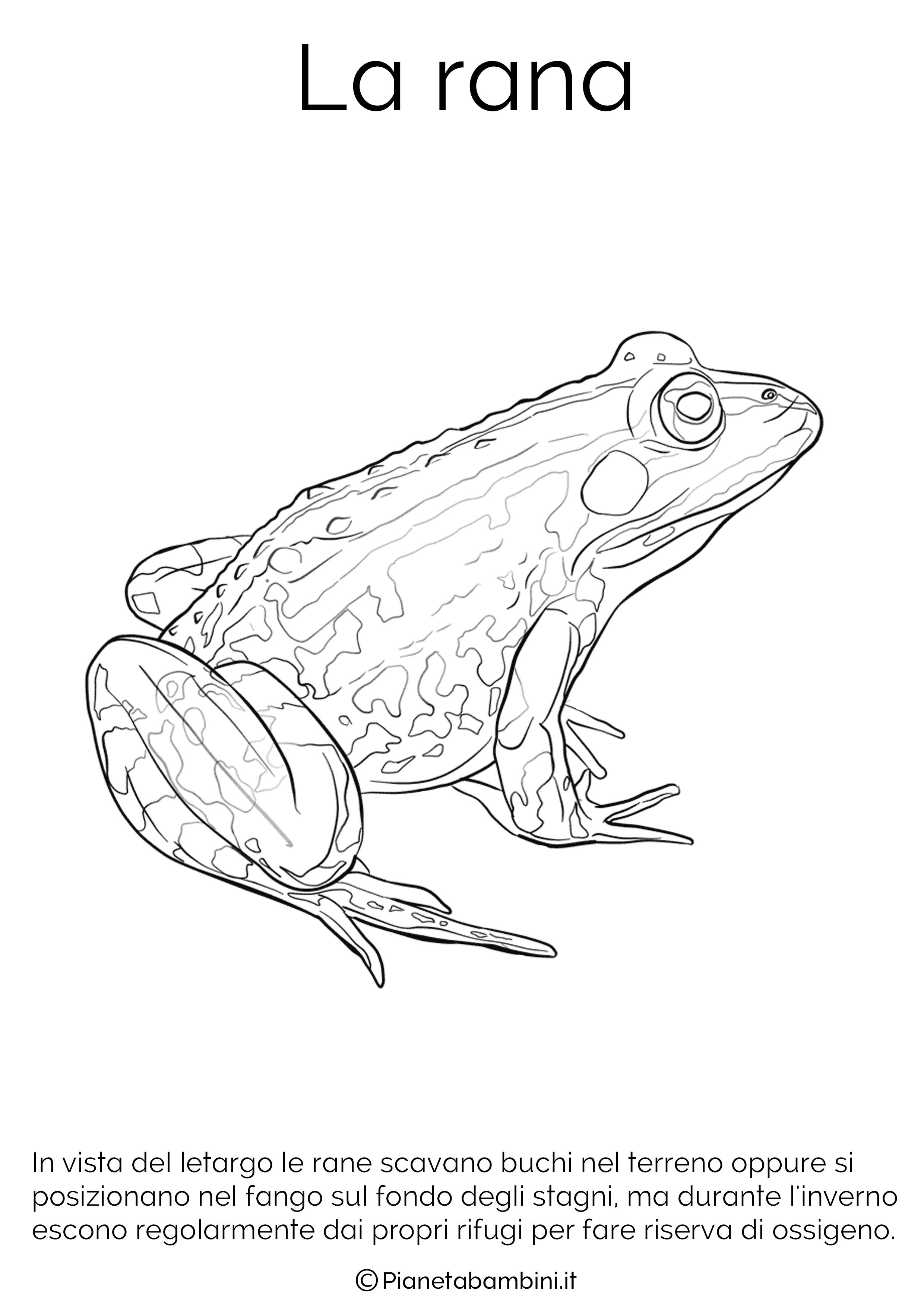 Impronta tartaruga disegni for Immagini di animali che vanno in letargo