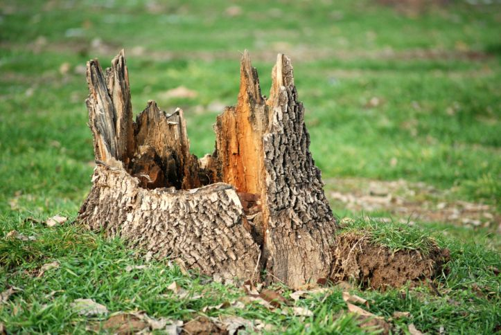 3 tricks to removing stumps cottage life tree stump