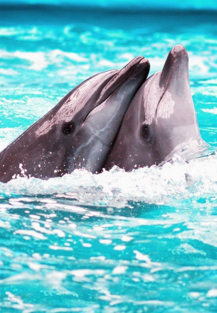 Love Dolphins Delfini via denebofficial Dolphin
