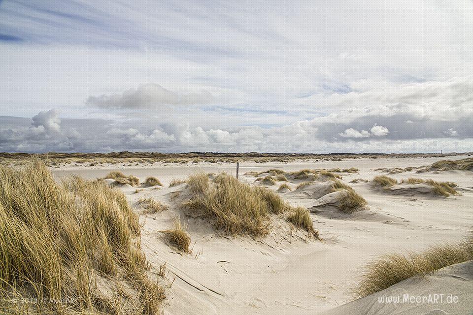 Amrum Auch Insel Der Freiheit Genannt Urlaub Nordsee Amrum