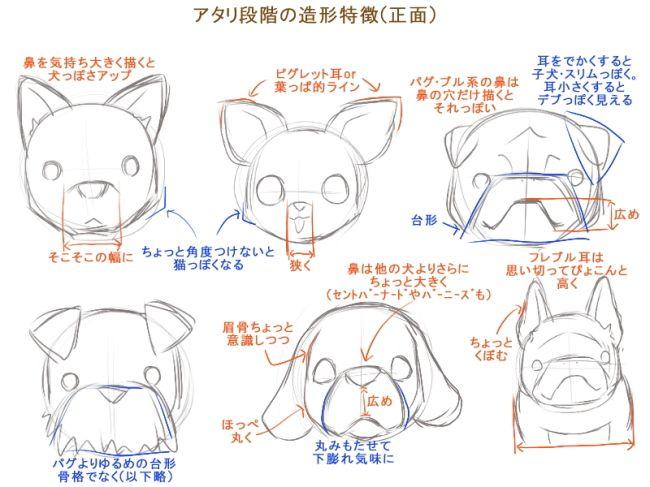 アタリ段階の造形特徴正面 鼻を気持ち大きく描くと犬っぽさ