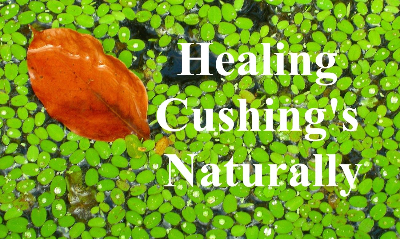 How To Naturally Cure Cushing Disease