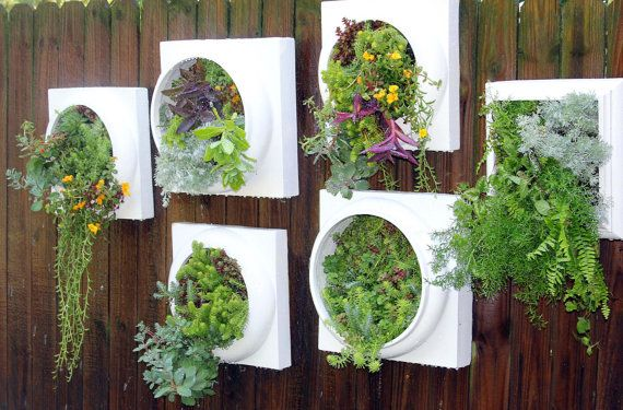 Kitchen Wall Herb Garden Perfect Fresh Herbs In An By Nevastarr Perfect For  Those Of Us Who Have Limited Space!
