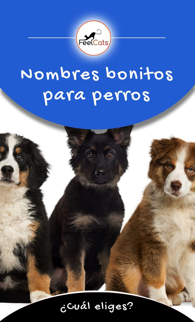 Nombres Para Perros Top 100 Más Bonitos Y Originales Nombres Bonitos Para Perros Nombres De Perro Hembra Nombres Para Perros Machos