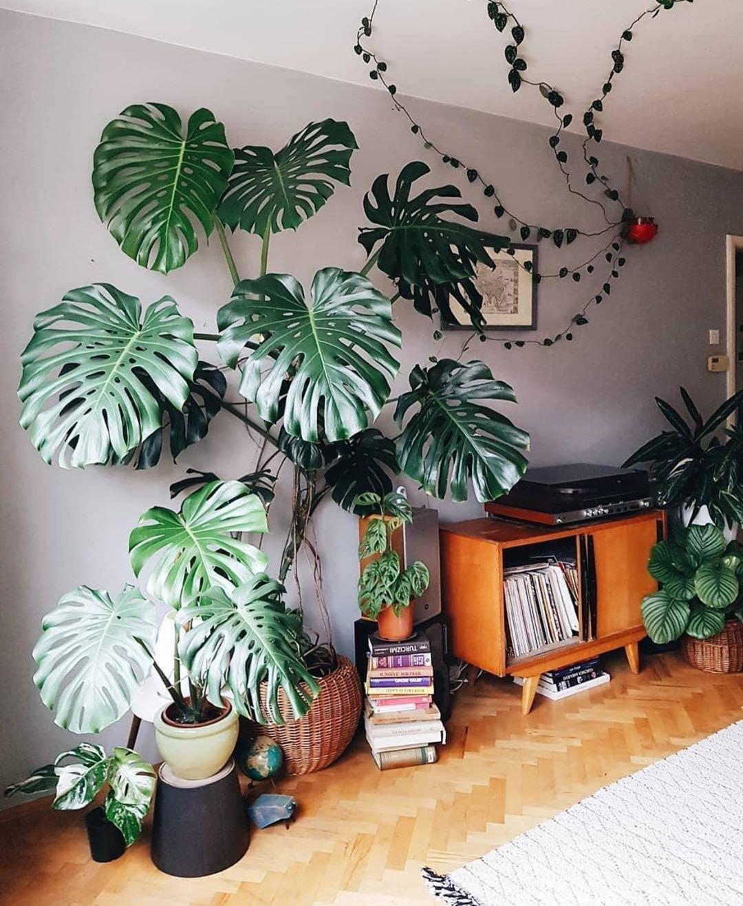 Monsteralicious House Plants Decor Bedroom Plants Plant Decor Indoor
