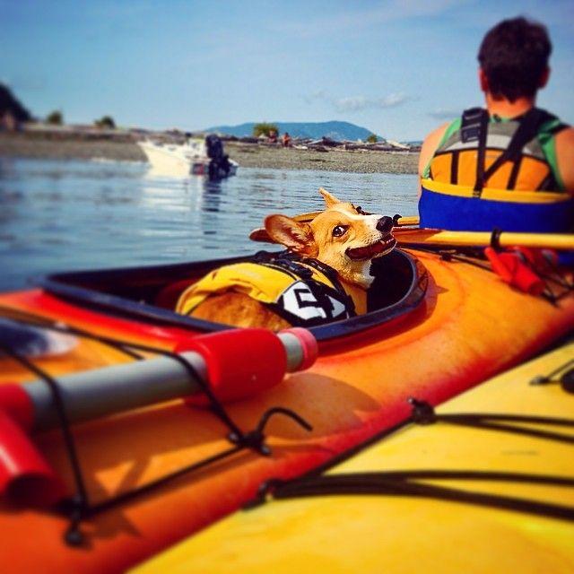 Frodo S First Kayaking Trip I Think He Liked It Pembroke Welsh Corgi Corgi Corgi Butts